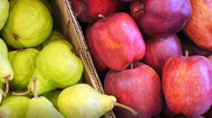 Río Negro. Alumnos de más de 270 escuelas tendrán fruta fresca en el próximo ciclo escolar