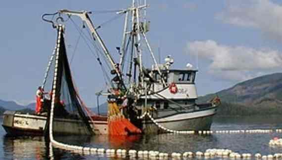 Salmon Harvests in Alaska Generally Below Expectations