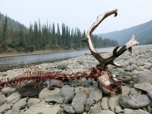Life Recycled on a Wilderness Gravel Bar