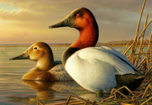 Young Amends Duck Stamp Legislation to Exempt Subsistence Users