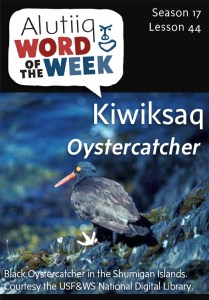 44OystercatcherWeb