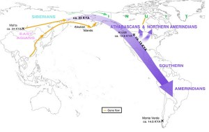 The migration route of Siberians into North America and the subsequent split into northern and southern Amerindian populations. Analysis of current and ancient genomes shows that there also was some later interbreeding between East Asians and Inuit.