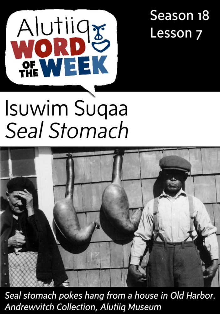 Seal Stomach-Alutiiq Word of the Week-August 9