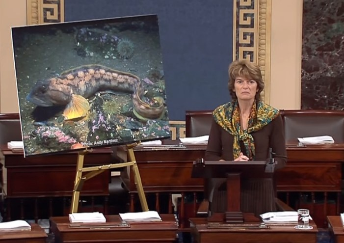 Murkowski Fights Back Against FDA's Approval of GE Salmon
