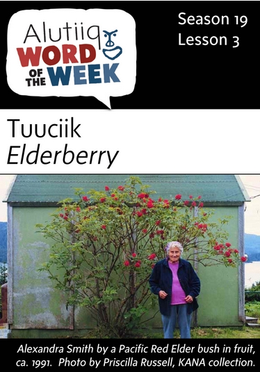 Elderberry-Alutiiq Word of the Week-July 17th