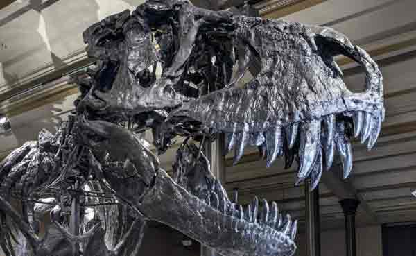 How Darkness and Cold Killed the Dinosaurs