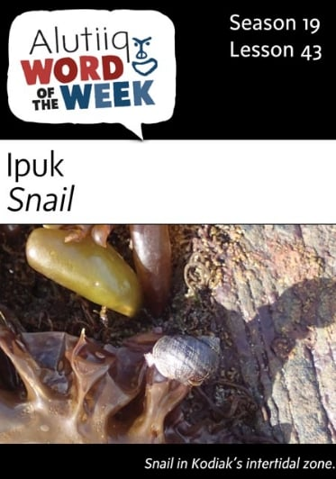 Snail-Alutiiq Word of the Week-April 23rd