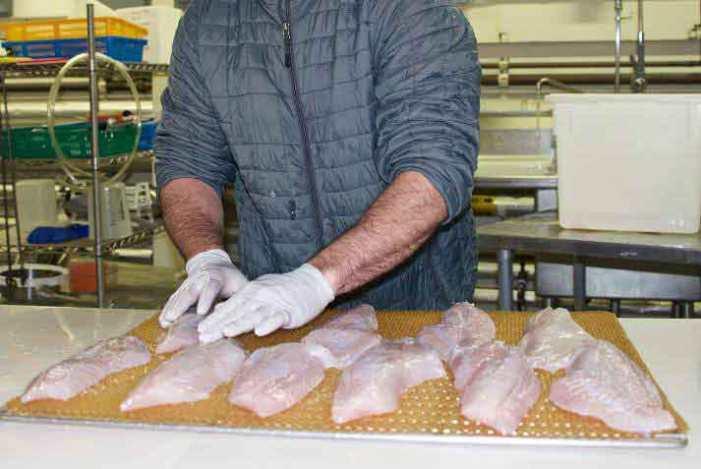 Recruitment Underway for Jobs in Alaska's Seafood Industry