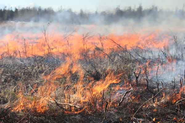 BLM AFS, USARAK Implement Successful Prescribed Fire Projects in Fall and Spring