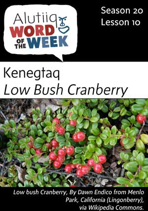 Lowbush Cranberry-Alutiiq Word of the Week-September 3rd