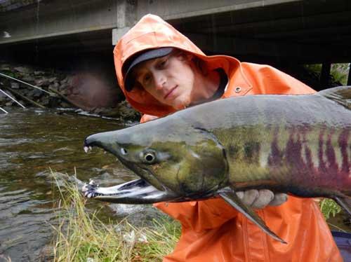 Salmon Hatcheries Make $600 Million Impact on Alaska