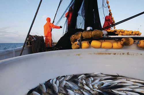 U.S. Leads in Global Fisheries Management