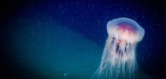 Fact vs. fiction: 3 things you thought you knew about jellyfish