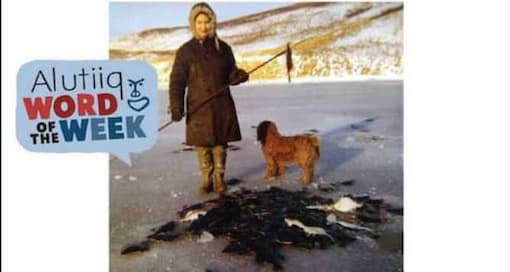 Starry Flounder-Alutiiq Word of the Week-February 21st