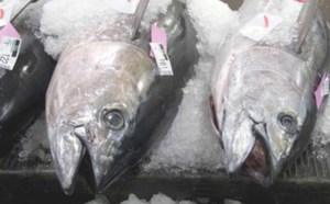 Ahi tuna, often a favorite on dinner tables, carries very high amounts of mercury. Credit: NOAA