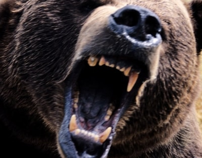 Sitka Troopers Unable to Locate Bear that Ate Dog and Startled Homeowner