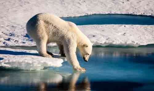 Arctic Could Be Iceless in September if Temps Increase Two Degrees