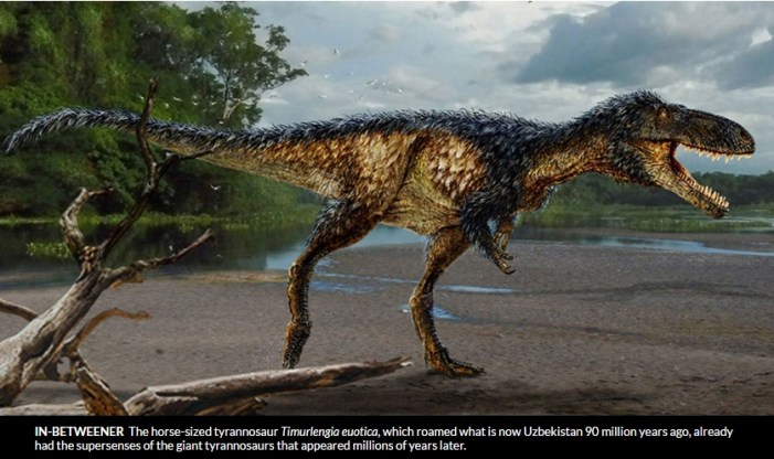Fossil Study Shows how T. Rex Became King