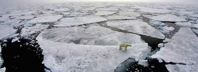 A polar bear wandering on the thinning sea ice in the spring of 2015. Credits: Marcos Porcires / Norwegian Polar Institute