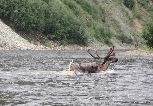 Op-Ed-Alaska Subsistence Hunting