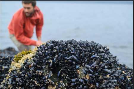 UAS Researchers Investigating Harmful Algal Blooms in Southeast Alaska