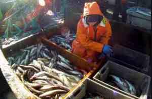 Pollock fishing. Image-NOAA fisheries