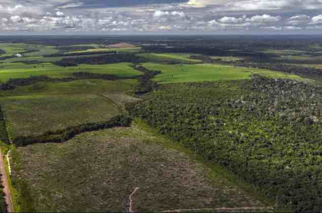 Amazon Forest Regrowth Much Slower Than Previously Thought