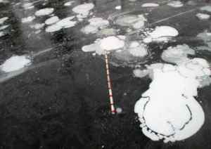 Photo by Melanie Engram Methane ebullition bubbles form in early winter lake ice in Interior Alaska. A yard stick is included for scale.