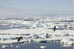 Sea ice in the polar sea. Jørn Berger-Nyvoll, UiT