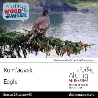 Eagle-Alutiiq Word of the Week-July 12th