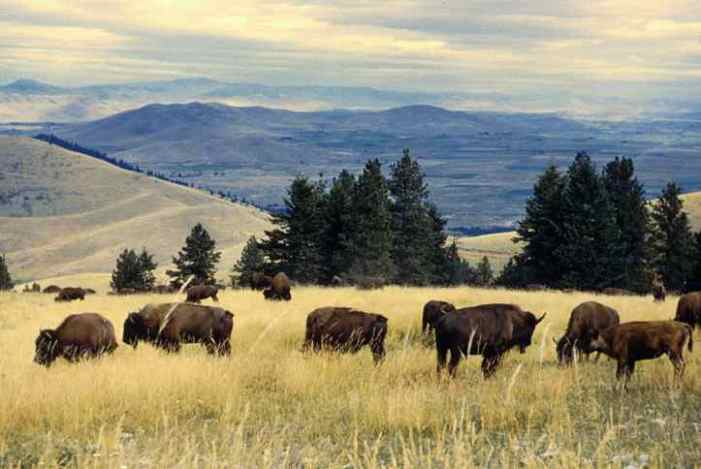 Secretary Bernhardt Signs Historic Secretarial Order to Transition the National Bison Range Into Tribal Trust for the Flathead Indian Reservation