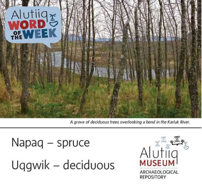 Spruce/Deciduous-Alutiiq Word of the Week-April 11th
