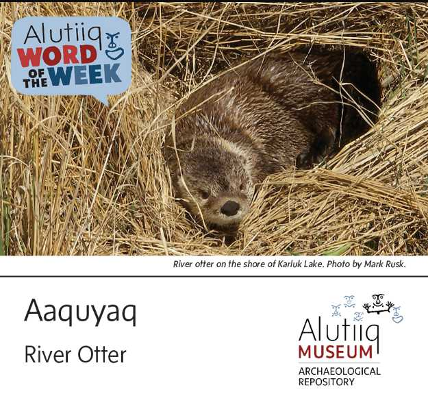 River Otter-Alutiiq Word of the Week-April 19th