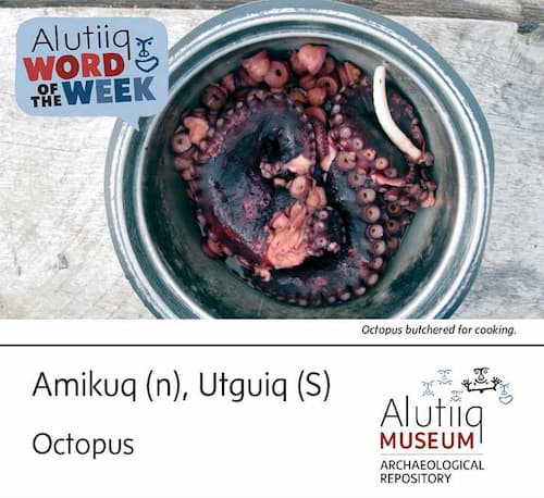 Octopus-Alutiiq Word of the Week-May 2nd