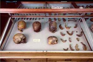 Skulls and other human remains from P.W. Lund's Collection from Lagoa Santa, Brazil. Kept in the Natural History Museum of Denmark. Credit: Natural History Museum of Denmark