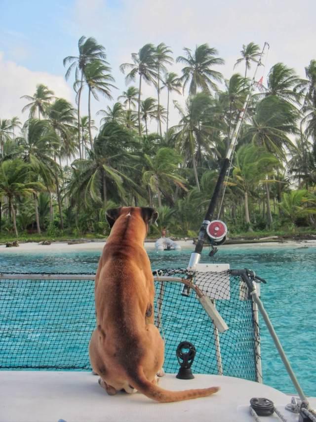 Koko elämänsä vesillä viettänyt laivakoira Mystico katselee ihmeissään rantaa