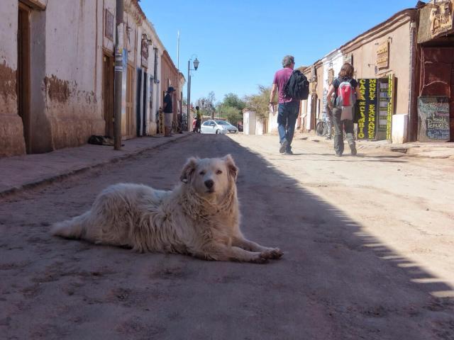 Paikallisten koirien tehtävänä on lähinnä makoilla ihmisten ja autojen tiellä.