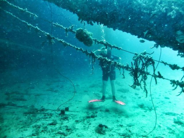 Yksi suosituimmista sukelluspaikoista oli Hilma Hooker, entinen huumeiden salakuljetuslaiva. Takavarikon jälkeen laiva upposi/upotettiin hiekalle riuttojen väliin mukavaan 30 metrin syvyyteen.