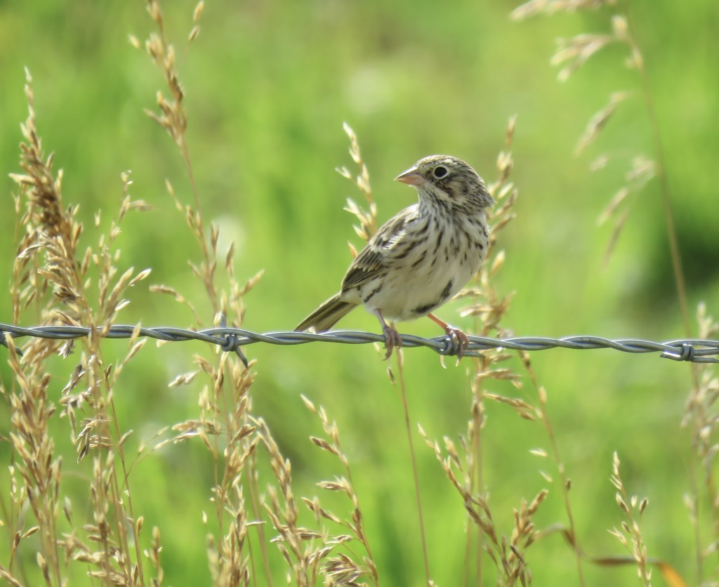 Pet Supplies Bird Nests X 9 Breeding Nest Bird Box Grass Weave Canary Finch 5.5 X 4.5 Inch Reliable Performance Other Bird Supplies