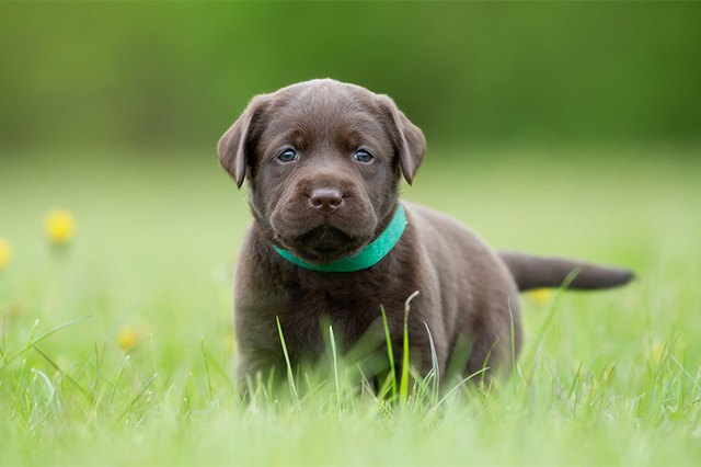 Top Ten Male Puppy Names Alaska Dog Works