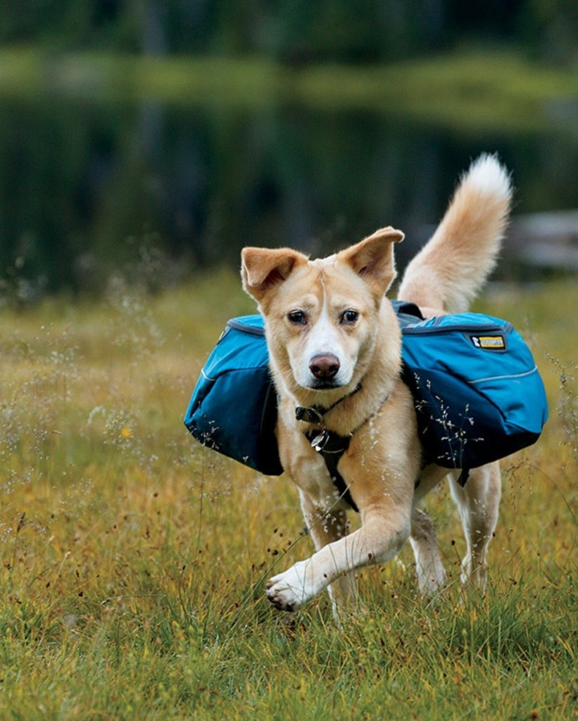 Dog wearing back pack alaska dog works