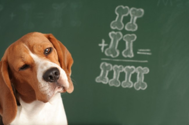 Alaska Dog Works Learning Theory