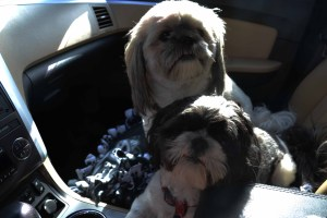 Kinley and Aker in the Car