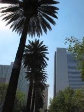 Skyscrapers and palms