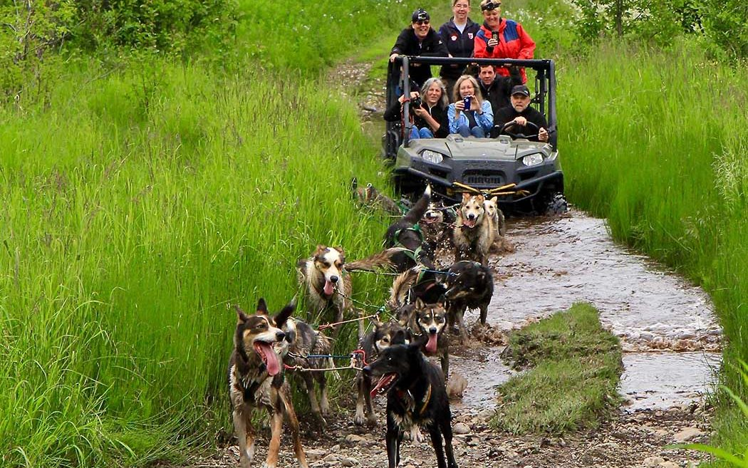 Sled dog tour Alaska