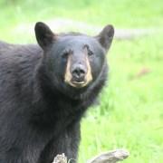 Bear kills teenaged runner in Bird Ridge mauling