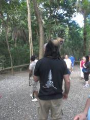honduras-monkey