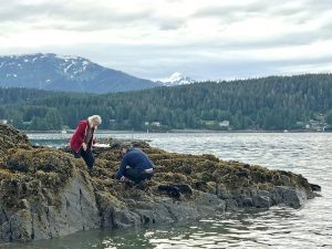 wo people on a rock covered in kelp