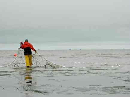 setnetting for fish