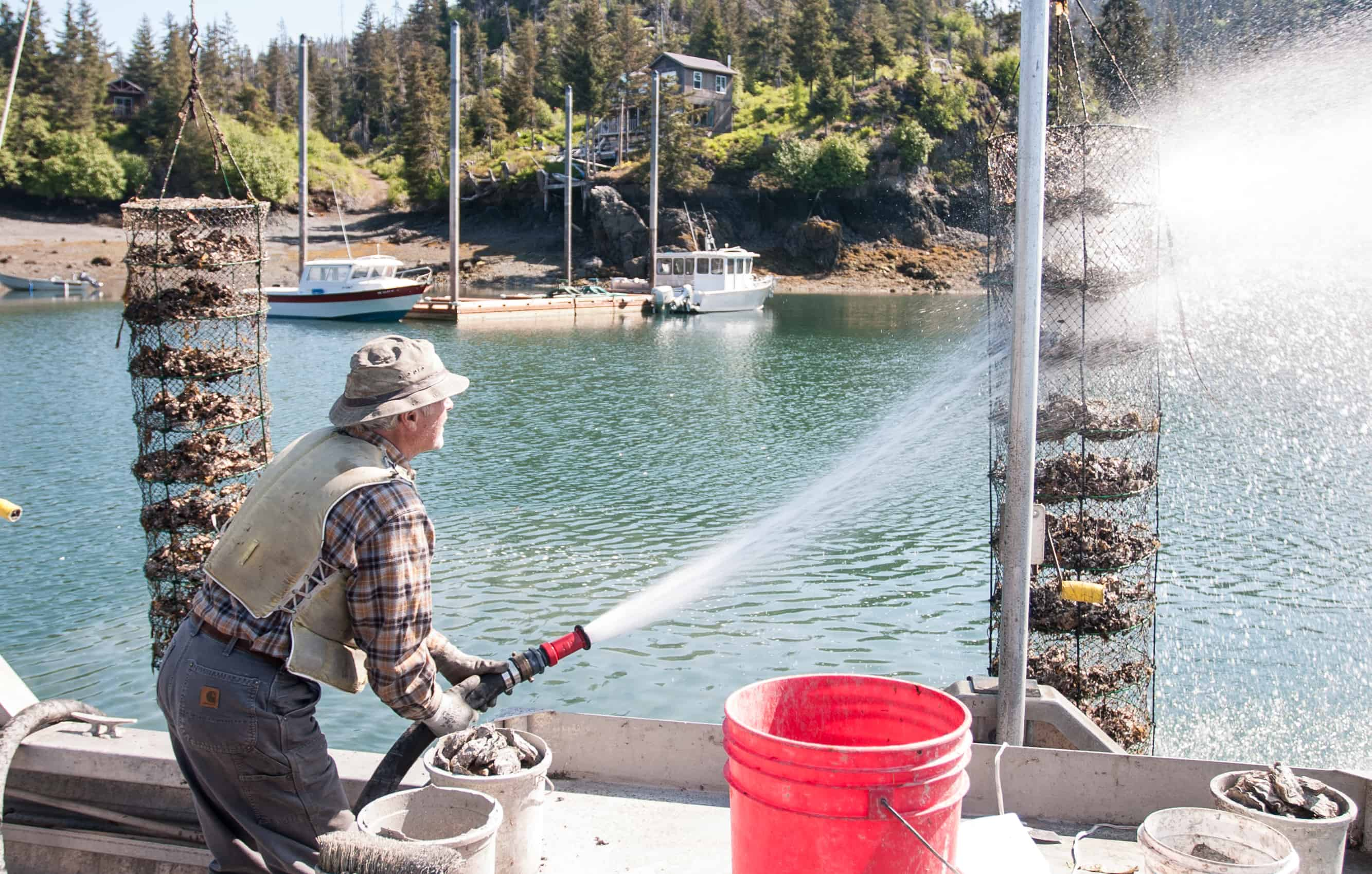 cleaning the shellfish catch